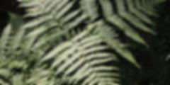 taimed-kilpjalg-001.jpg