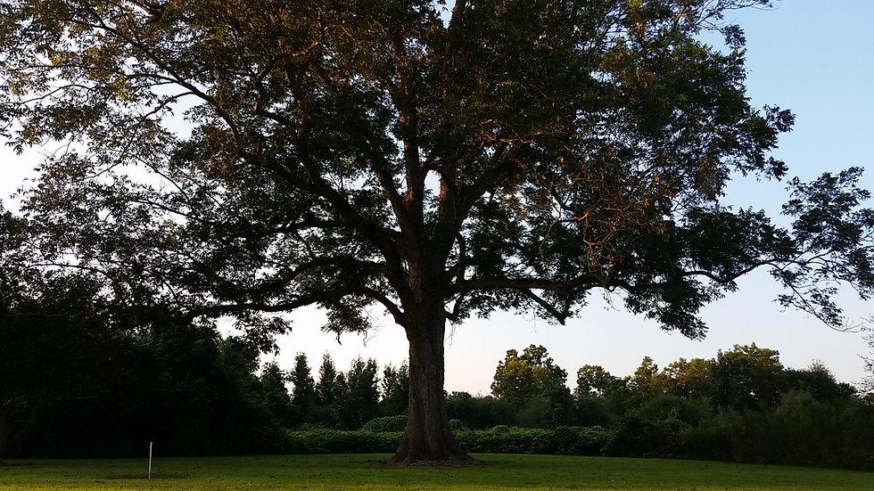 tree-2730934.jpg