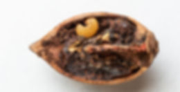how-you-can-control-the-pecan-weevil.jpg