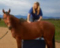 Jami-Whiting-horse.jpg