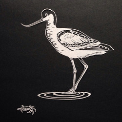 Avocet and Shore Crab