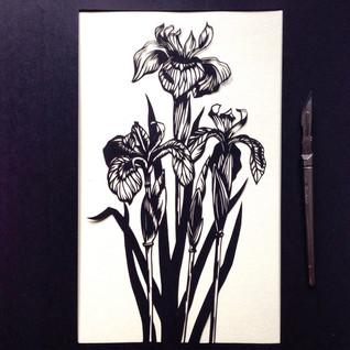 Iris  £200
