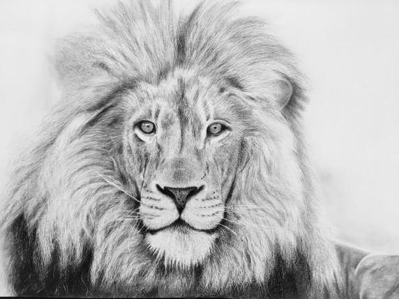 Lion commission, 2017