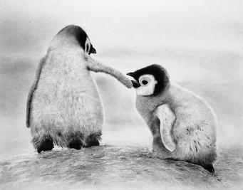 Penguins, 2017