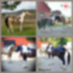 IMG_2018-07-05_15-10-28.JPG