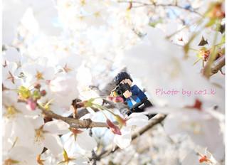 桜とミニフィグ