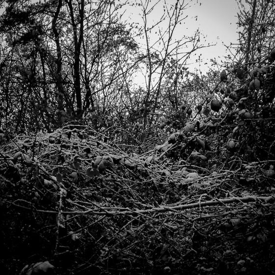 ©siat-2014_NouvelAn_Pourtales-07.jpg