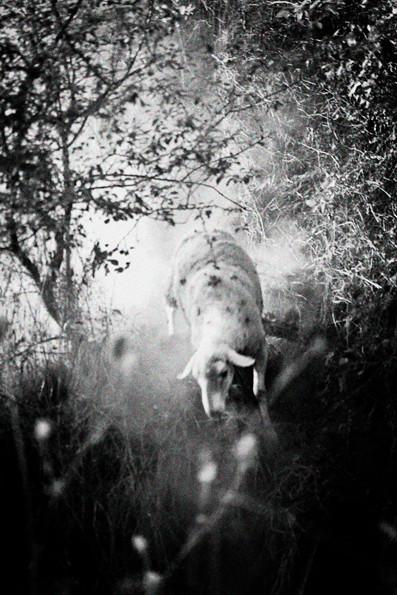 ©Patricia Morosan