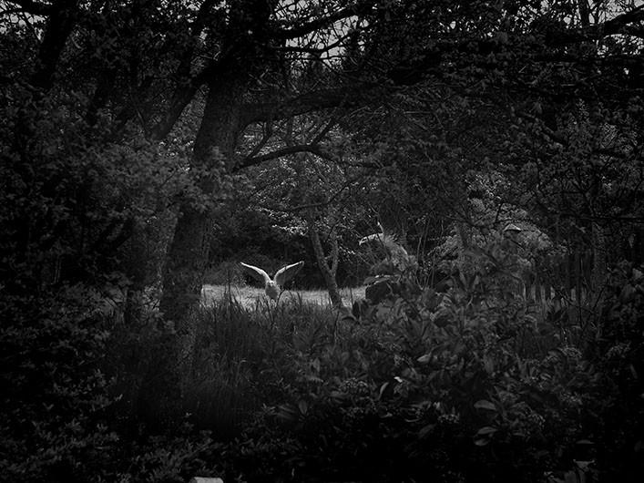 ©Tendance Floue Azimut Alain Willaume