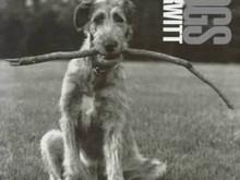 Dog Dogs / Elliott Erwitt