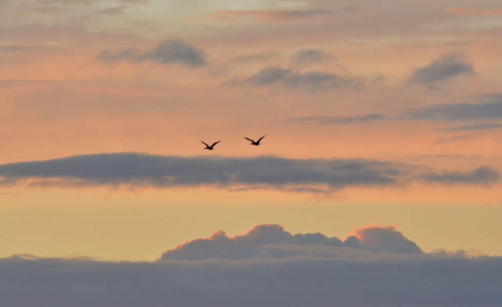 two birds flying on sky at daytime_edited_edited_edited_edited.jpg