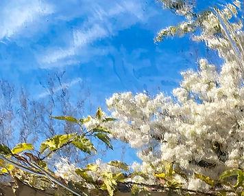 Spring in Novato 8by10.jpg
