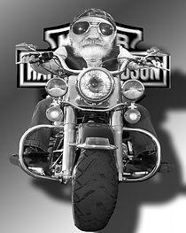 Harley%20Rider_edited.jpg