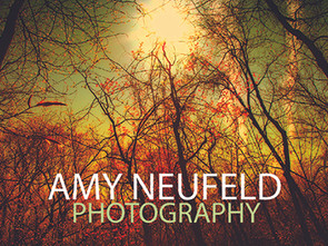 A Stroll Through the Ethereal Forest with Amy Neufeld Photography