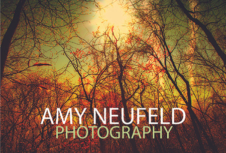 "One of my photographs depicting a forest with autumn colors & text ""Amy Neufeld Photography"""