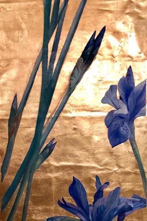 Blue Iris Golden Painting