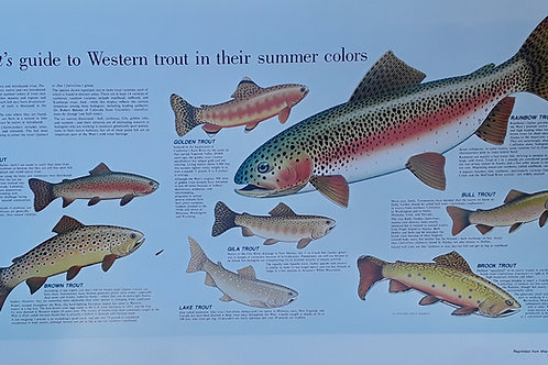 Western Trout - May 1986