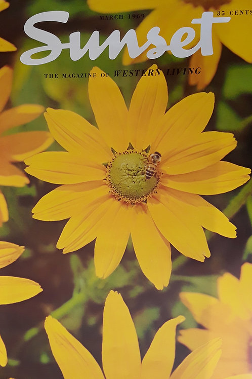 Daisies - March 1969