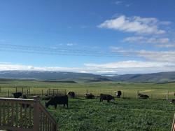 Hay fields (2)