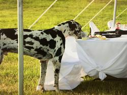 Bubba enjoying a little wedding cake!