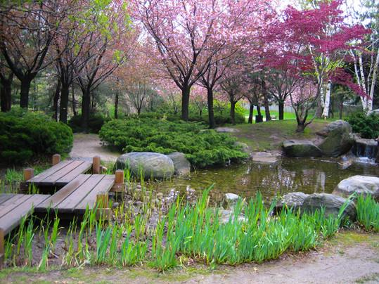 Kariya PArk may 2012 iris pond.jpg