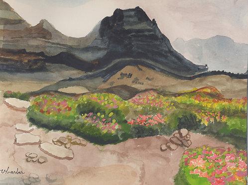 Summer Bloom Glacier by Virginia Barber