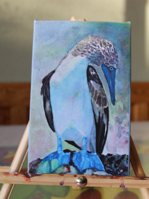 Blue Footed Boobie - Galapagos