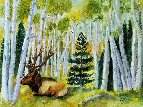 Elk in Aspen Grove Card