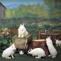 Back Cover - Bunny Mini Book II 2021 - F