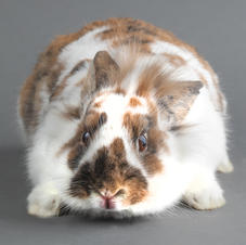 Name this Bunny!