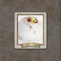 Cover - Bunny Mini Book 2021 - FamilyLif