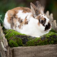 Name this Bunny
