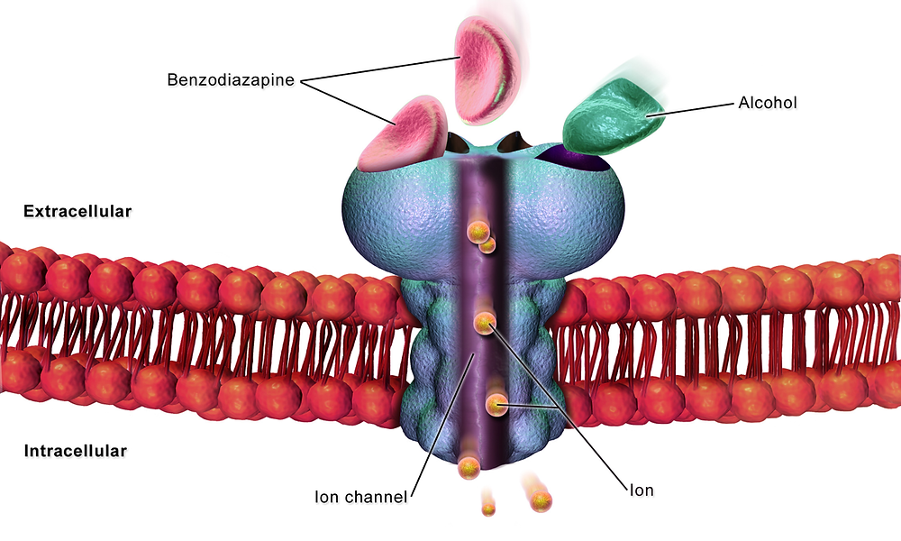 A cell Gaba receptor, image donated by Blausen Medical