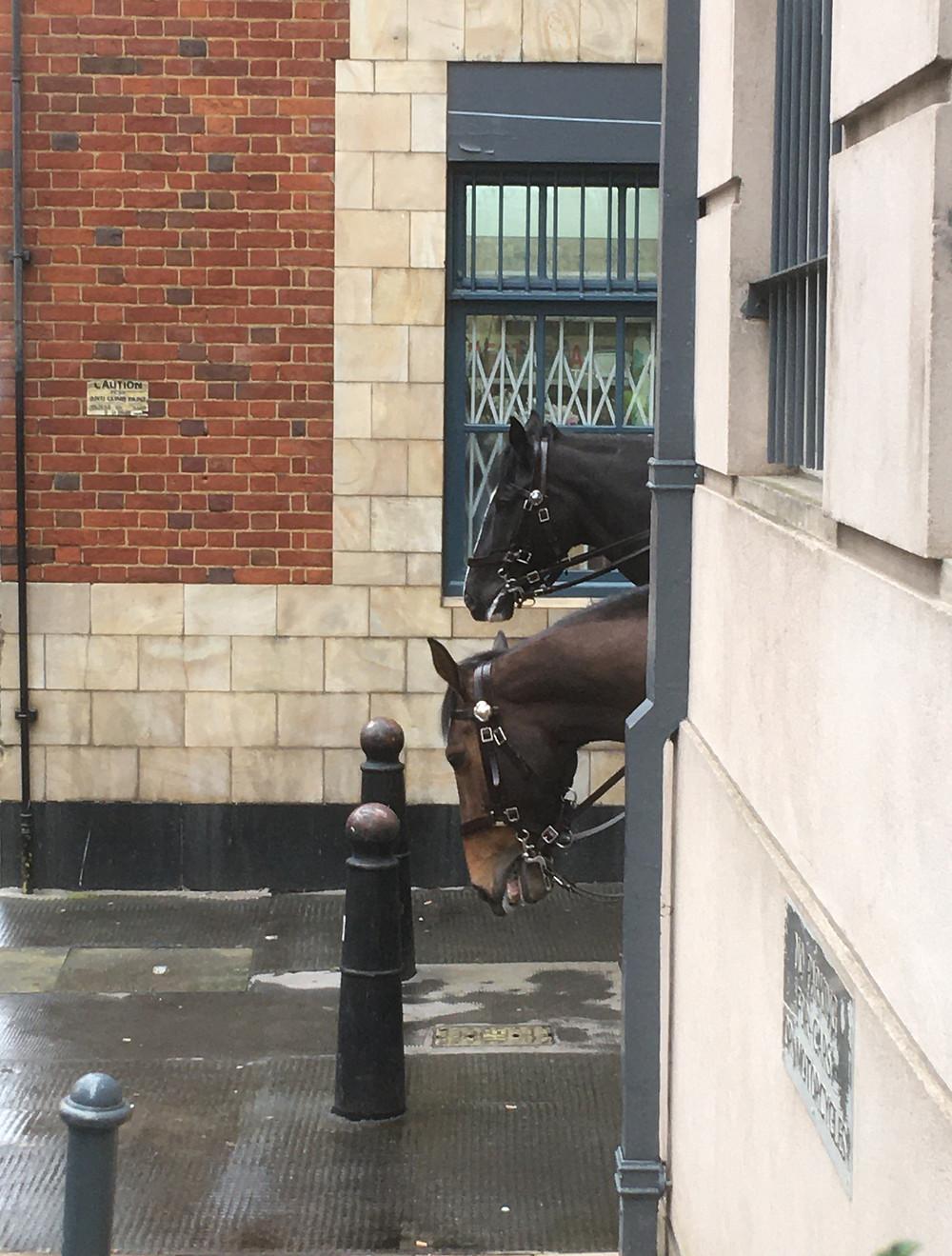 Two horses in Clerkenwell