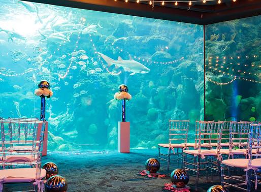 Planning Wedding Music at The Florida Aquarium