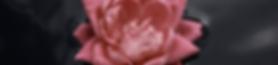 Floating flower header(1).png