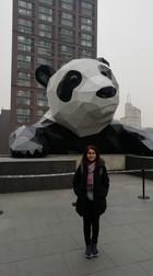 With Giant Panda, visiting Sichuan University 2018