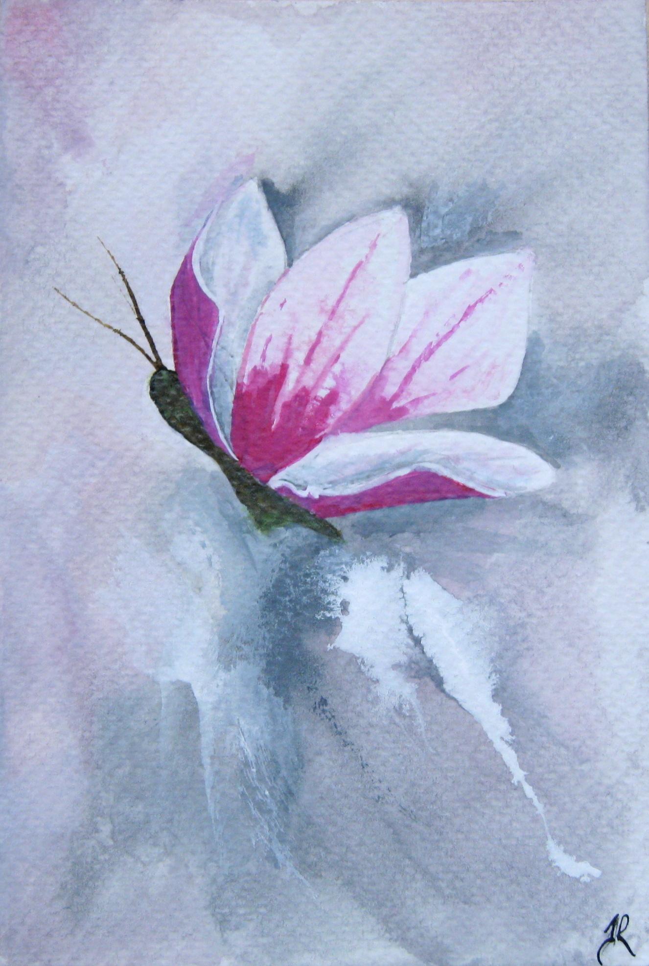Magnolia Flower Butterfly.