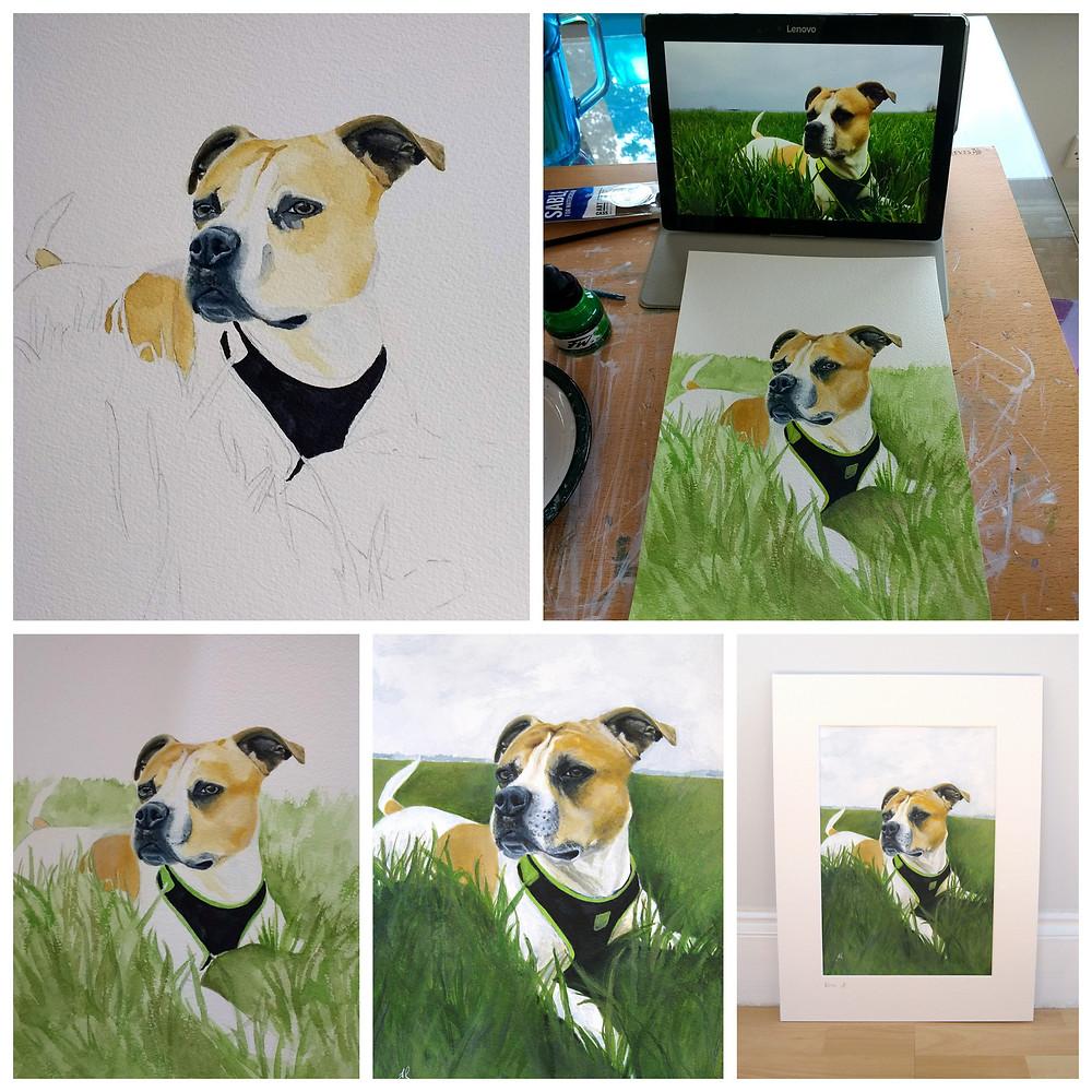 Boxer dog painting process for pet portrait.