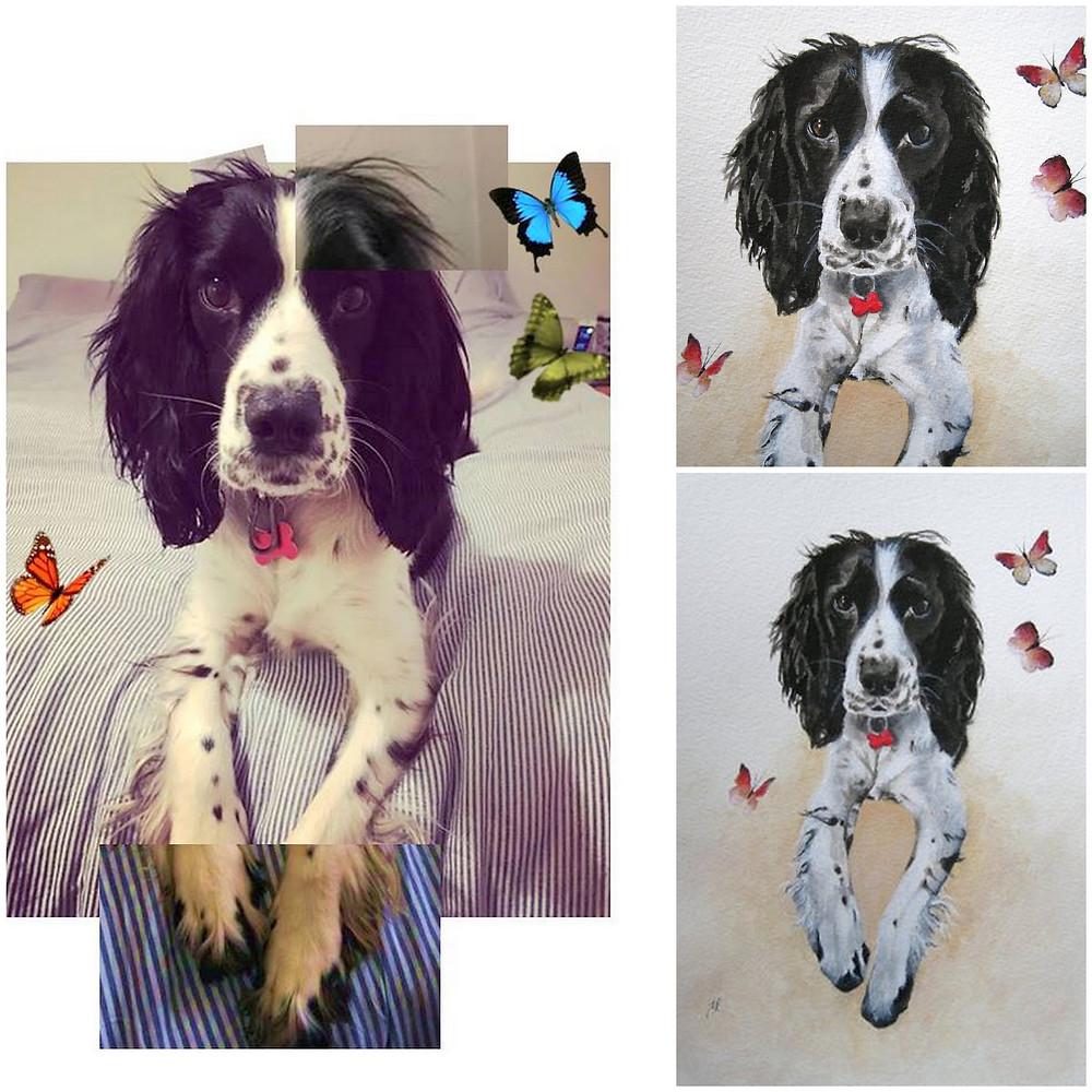Spaniel dog pet portrait commission.