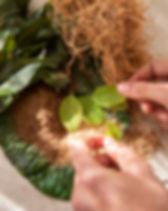 KH_Herbs-5.jpg