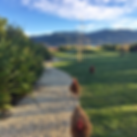 Screen Shot 2018-10-03 at 2.59.02 PM.png