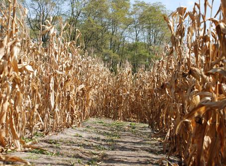 Colorado Corn Maze - Fall Activities in Colorado