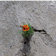 How to Build Resilience in a Crisis