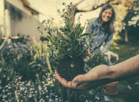 Four Surprising Benefits of Gardening