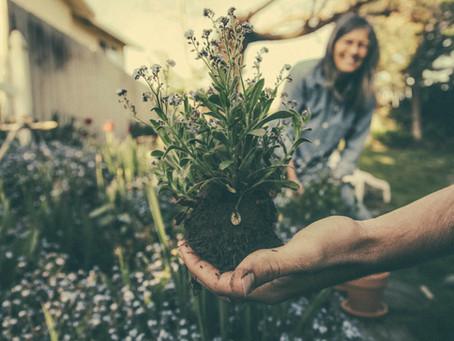 Four Surprising Benefits of Gardening