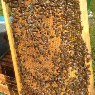Beehives1.JPG