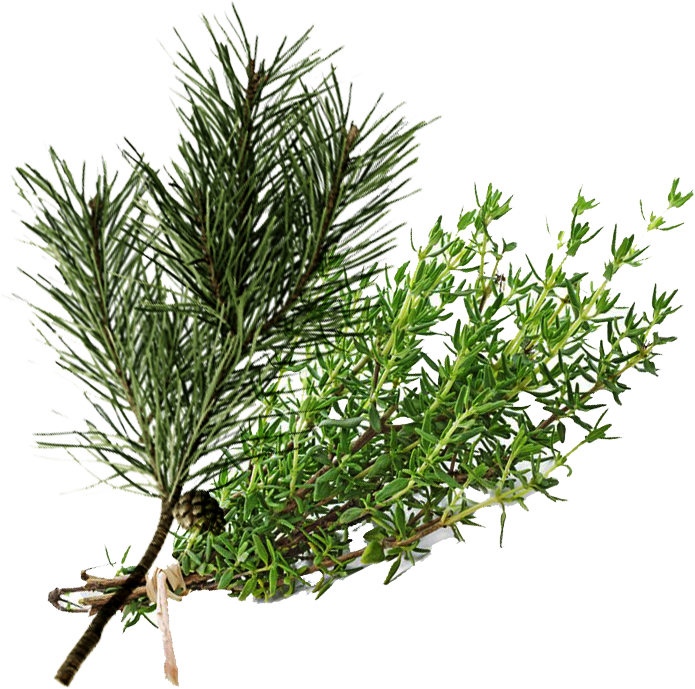 Thyme and Pine.png