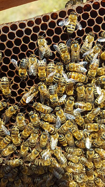 Bees on hive 2.JPG