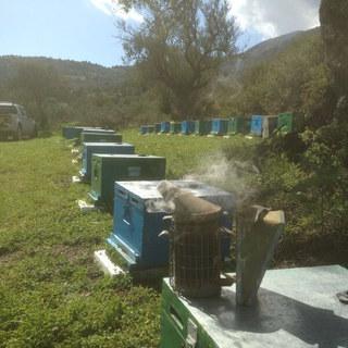 Beehives-landscape3.JPG